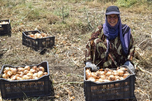 A woman sitting next to a box of harvested onions