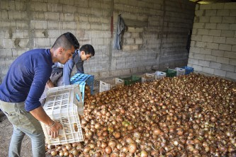 Two men offloading a box of onions into a storage room