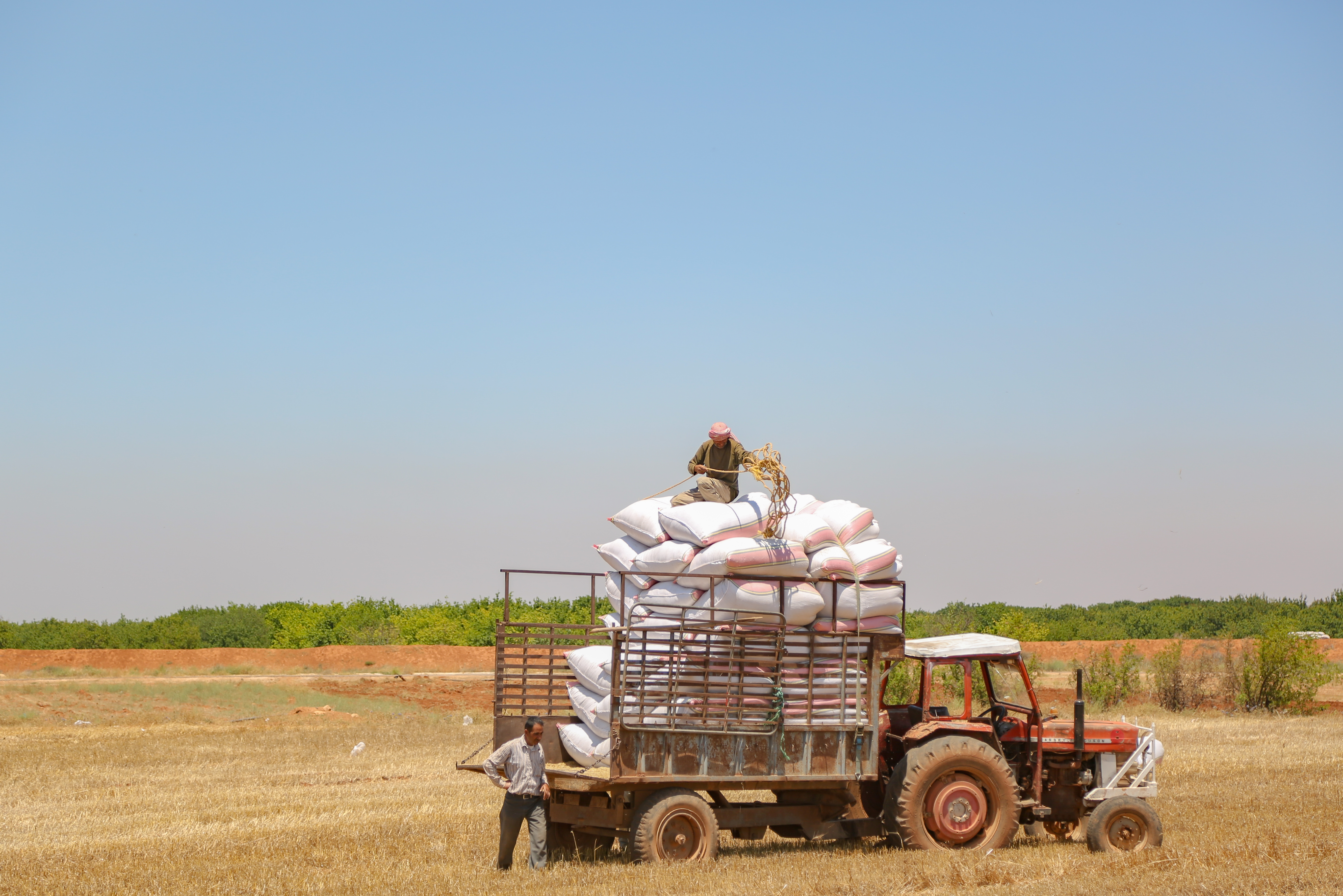 A group of people in a field harvesting onions